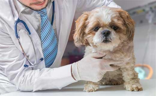 expert veterinarian