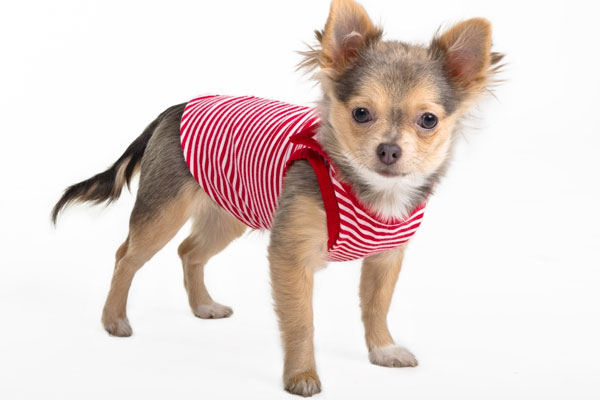 How you are buying the best dog T-shirts