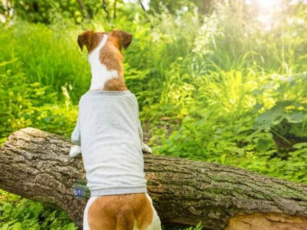 How You are Buying the Best Dog T-Shirts?